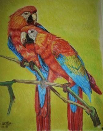 Animaux dessin - Dessins de perroquets ...